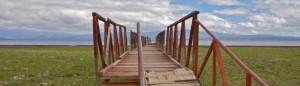 cropped-bridge.jpg